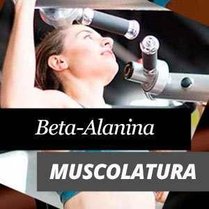 Beta Alanina e la muscolatura