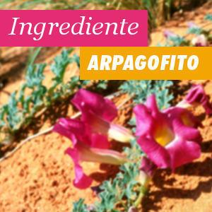 Ingrediente Arpagofito