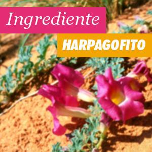 Ingrediente Harpagofito