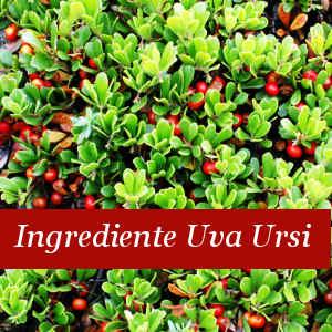 Ingrediente Uva Ursi